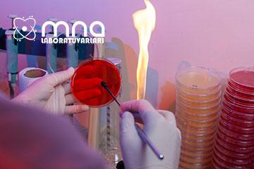 MNA Laboratuvar web tasarım